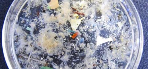 Ambiente: La 'zuppa di plastica nel Mediterraneo', accumulo delle microplastiche su organismi e pescato
