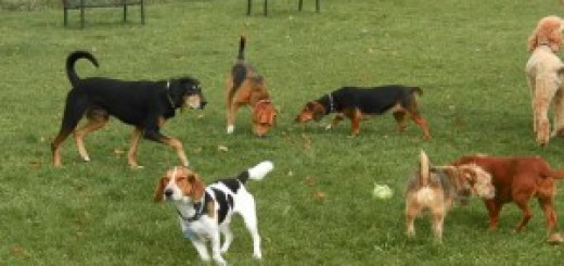 sgambatoio cani