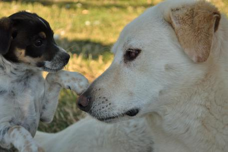 Animali, cani domestici