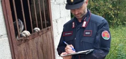 Operazione Cc Forestali Pesaro Urbino