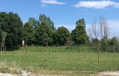 Riforestazione1