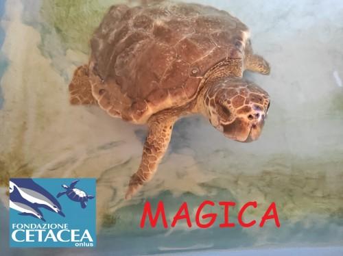 MAGICA TARTA